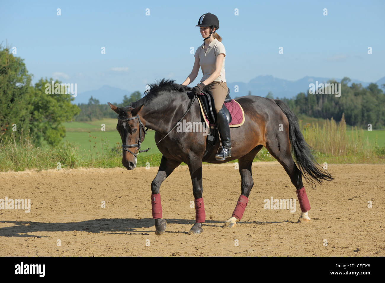 Dressage rider on back of a German horse, walk on a long rein Stock Photo