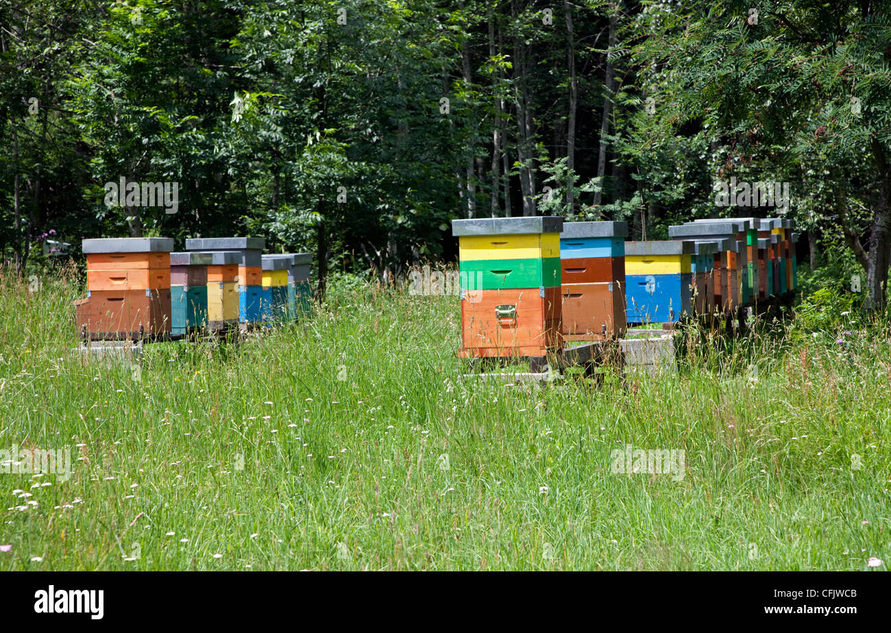 Beehives in the Alps, Northern Italy - Stock Image