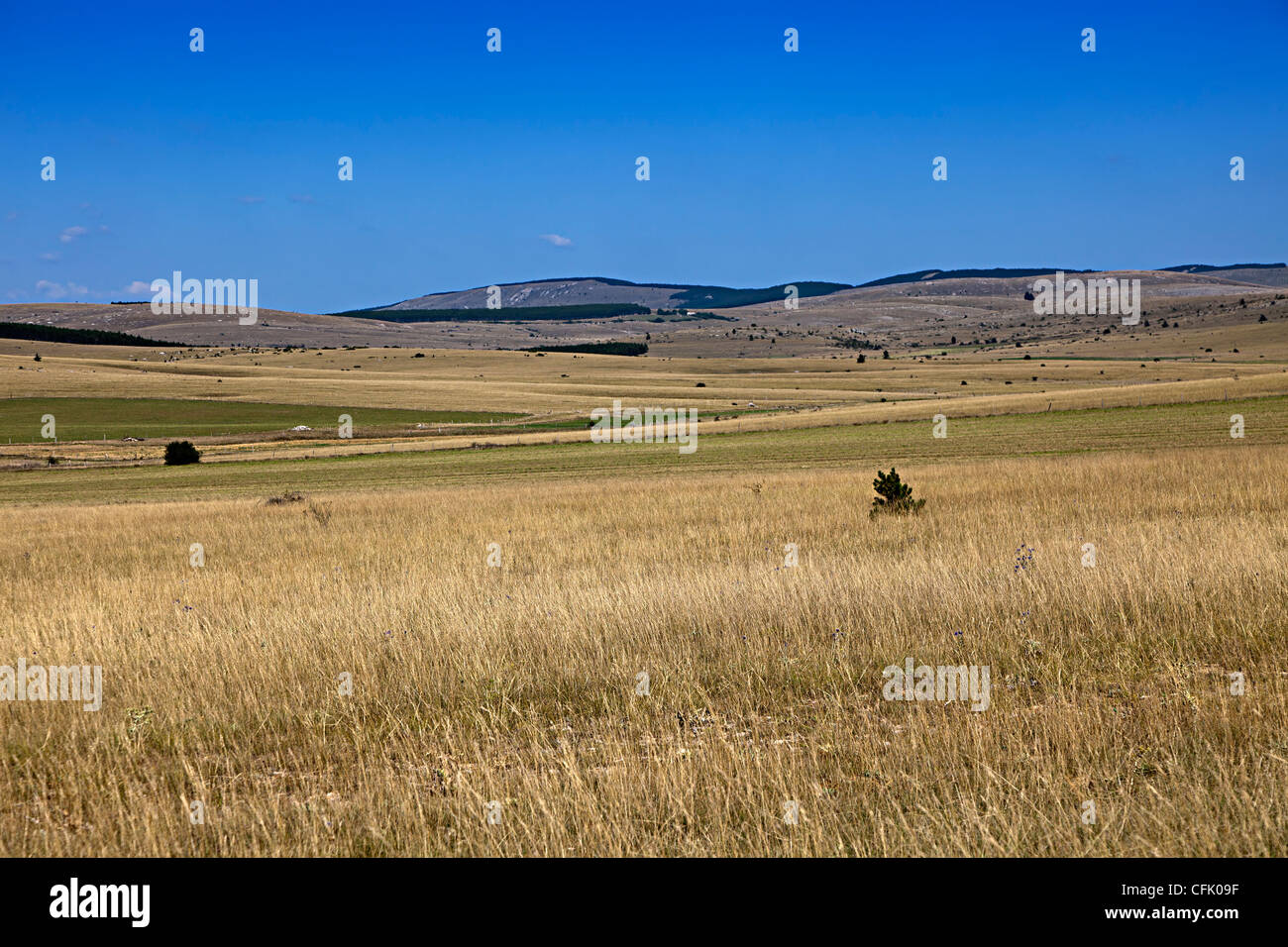 Grassland on the Causse Mejean limestone plateau, Lozere, France - Stock Image
