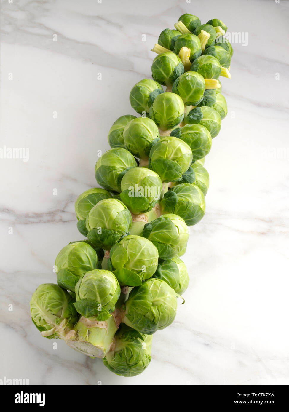 Brussels sprouts tree Stock Photo