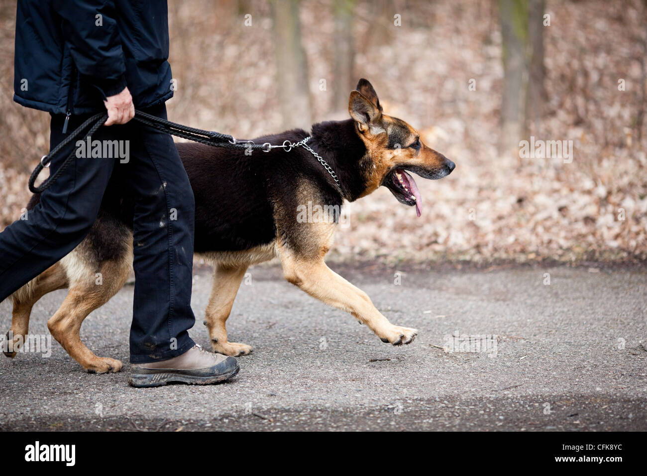 Master and his obedient (German Shepherd) dog - Stock Image