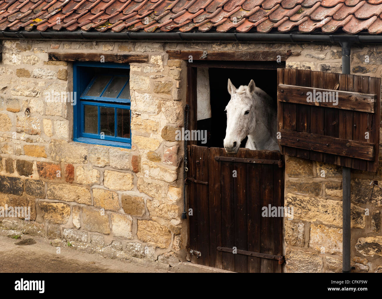Horse in stables - Stock Image