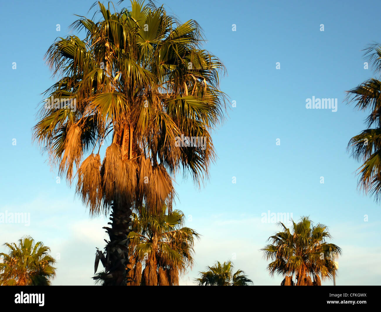 Many palm trees by sunset and beautiful weather Stock Photo