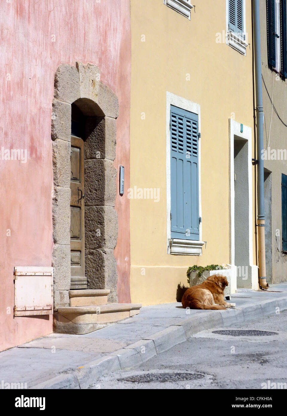 Clear brown dog lying on the pavement in a street with colored facades of house - Stock Image