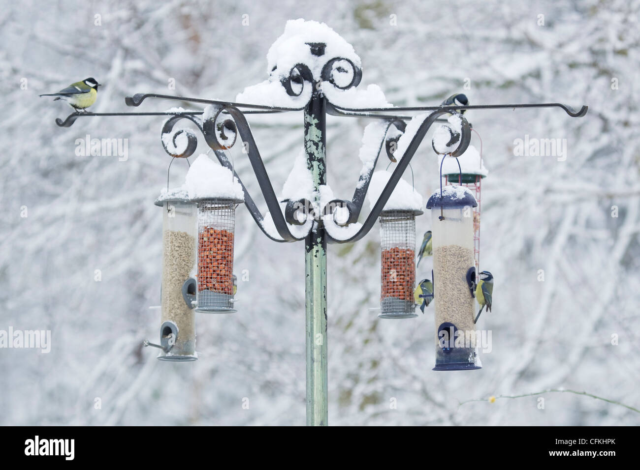 Birds on feeder in winter woodland with snow Brentwood Essex, UK BI022004 - Stock Image