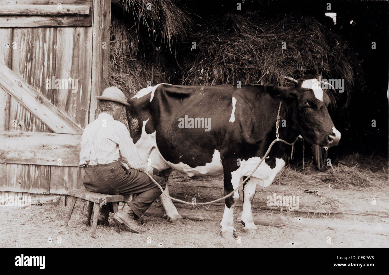 Old Dairy Farmer Milking A Cow Stock Photo 44075620 Alamy