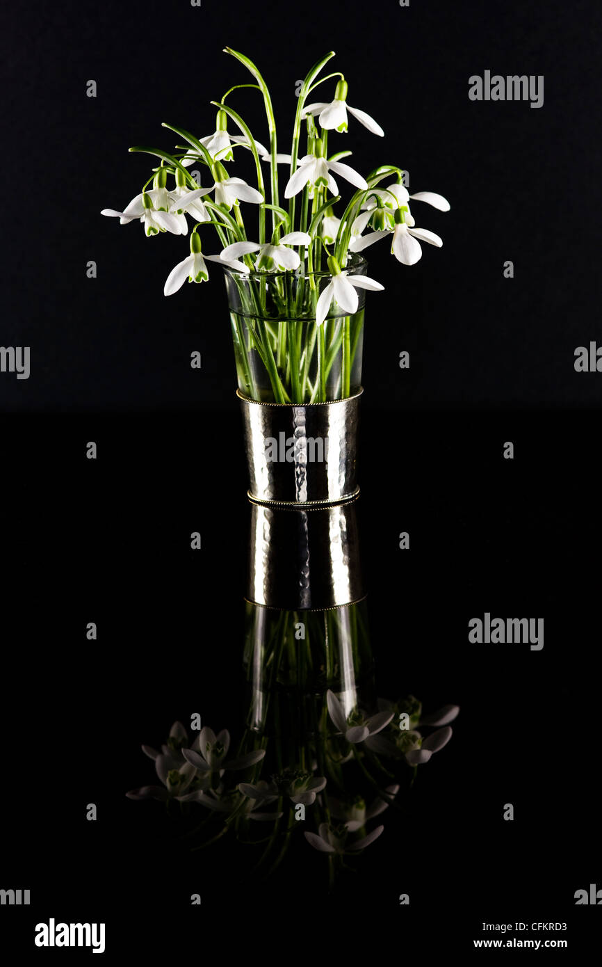 Galanthus nivalis. Snowdrops in a glass vase reflected on a black background. - Stock Image