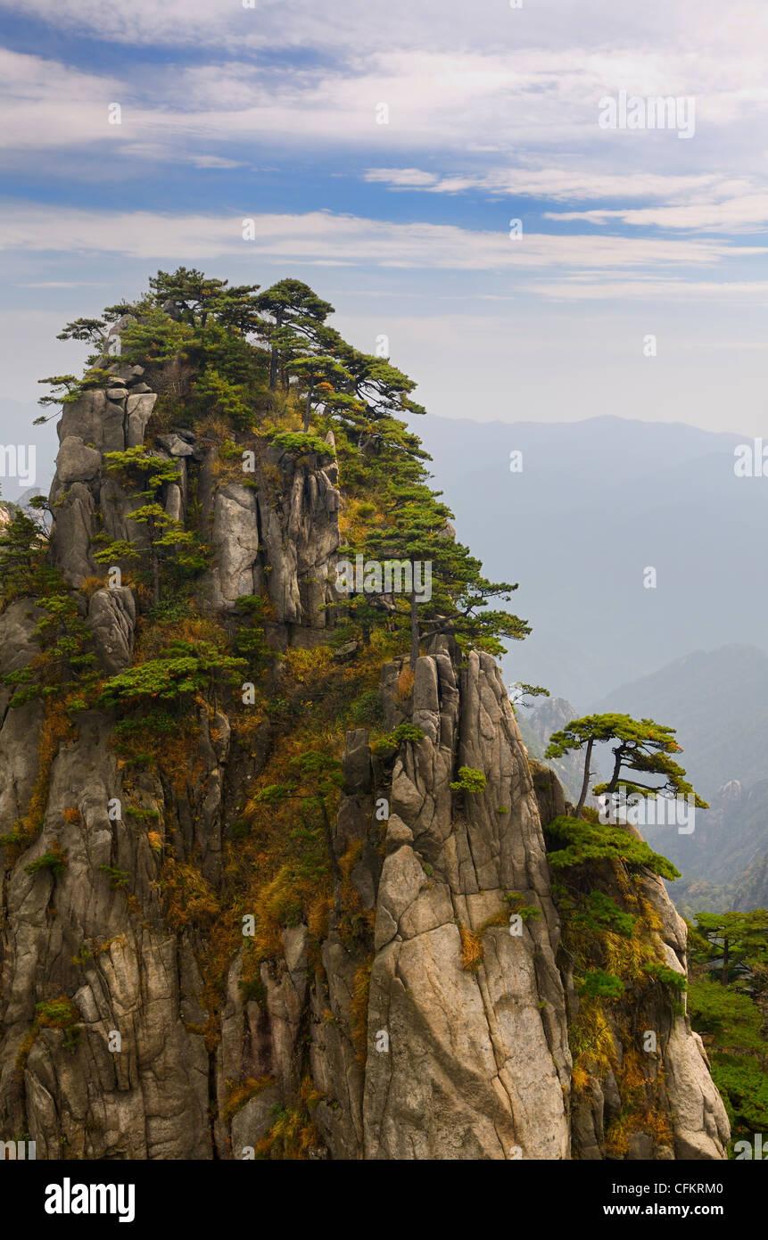 Pine trees growing on Stalagmite Peak on Yellow Mountain Huangshan China - Stock Image