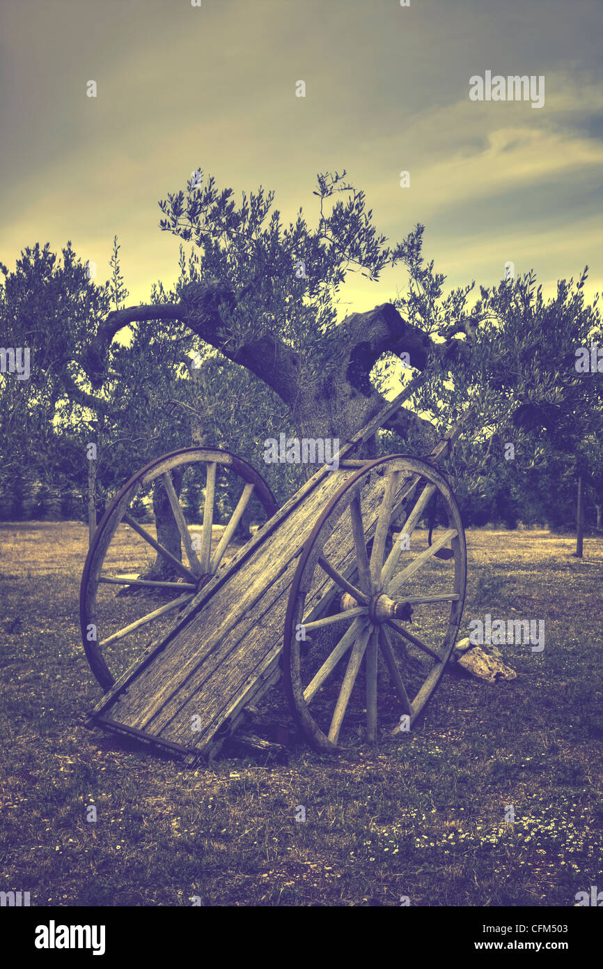 old straw cart in an olive grove - Stock Image