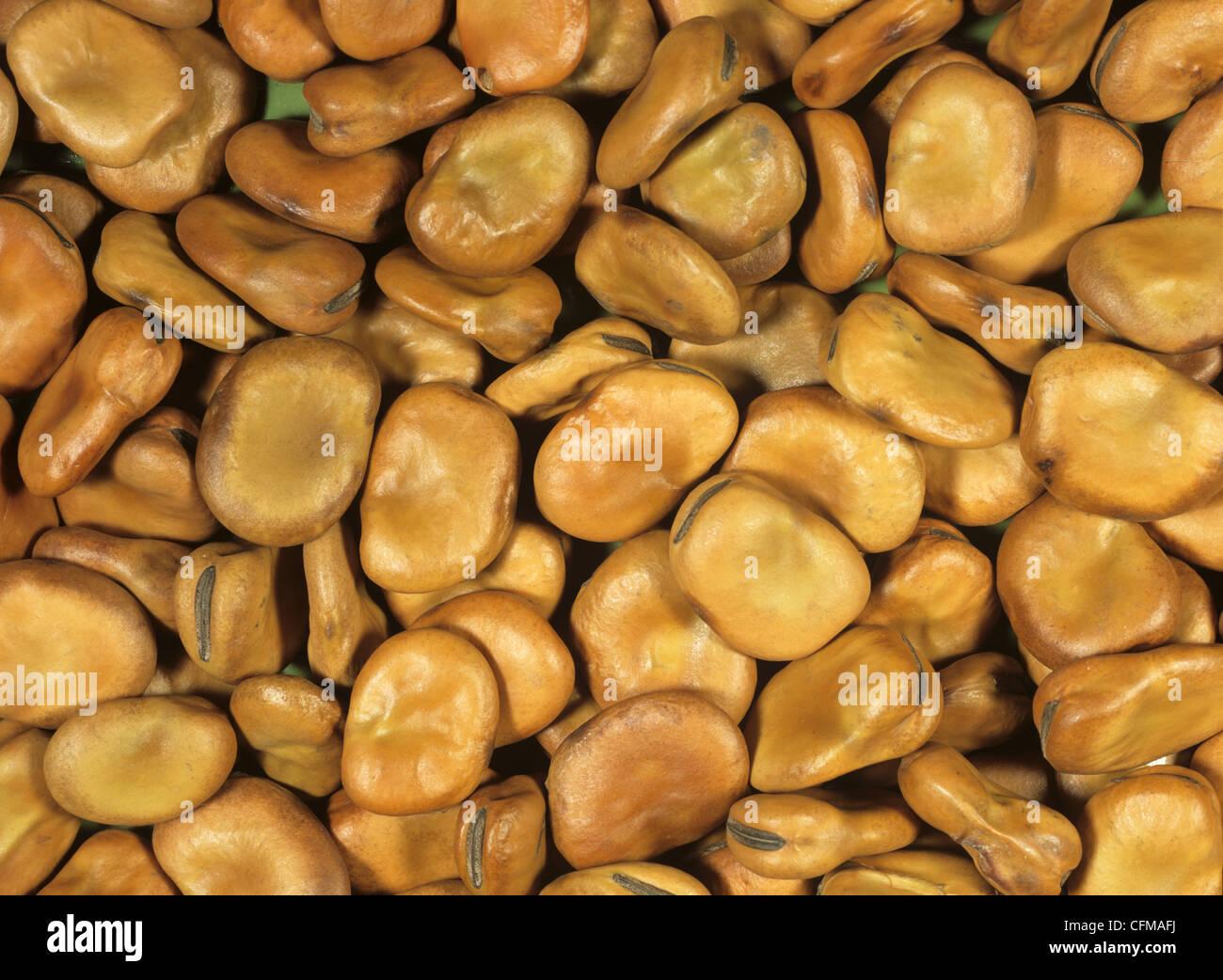 Broad bean seeds (Vicia faba) - Stock Image