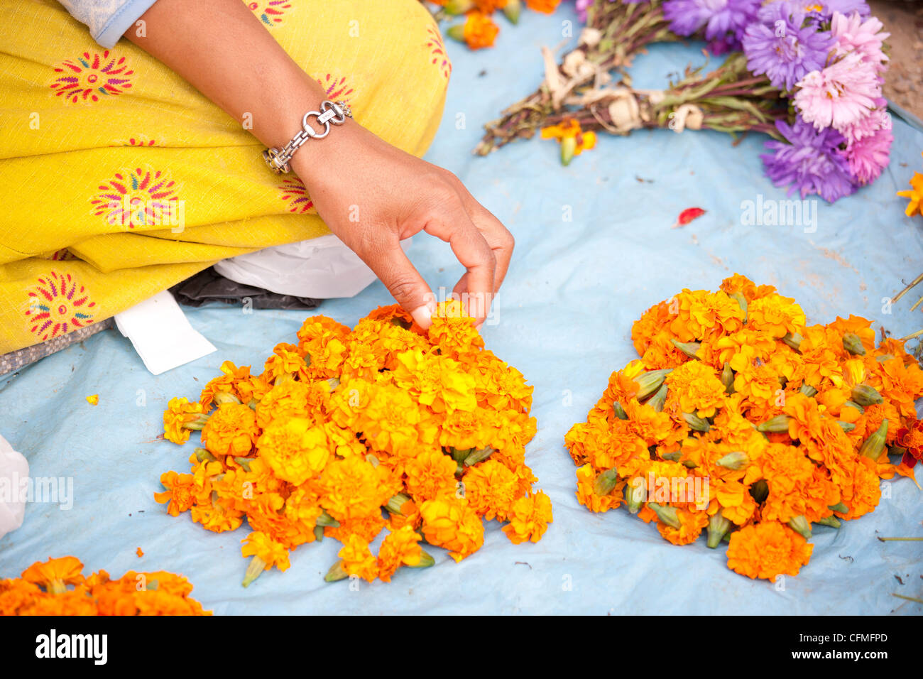Flower seller with the heads of marigolds used by Buddhists as holy offerings at temples and shrines, Kathmandu, - Stock Image
