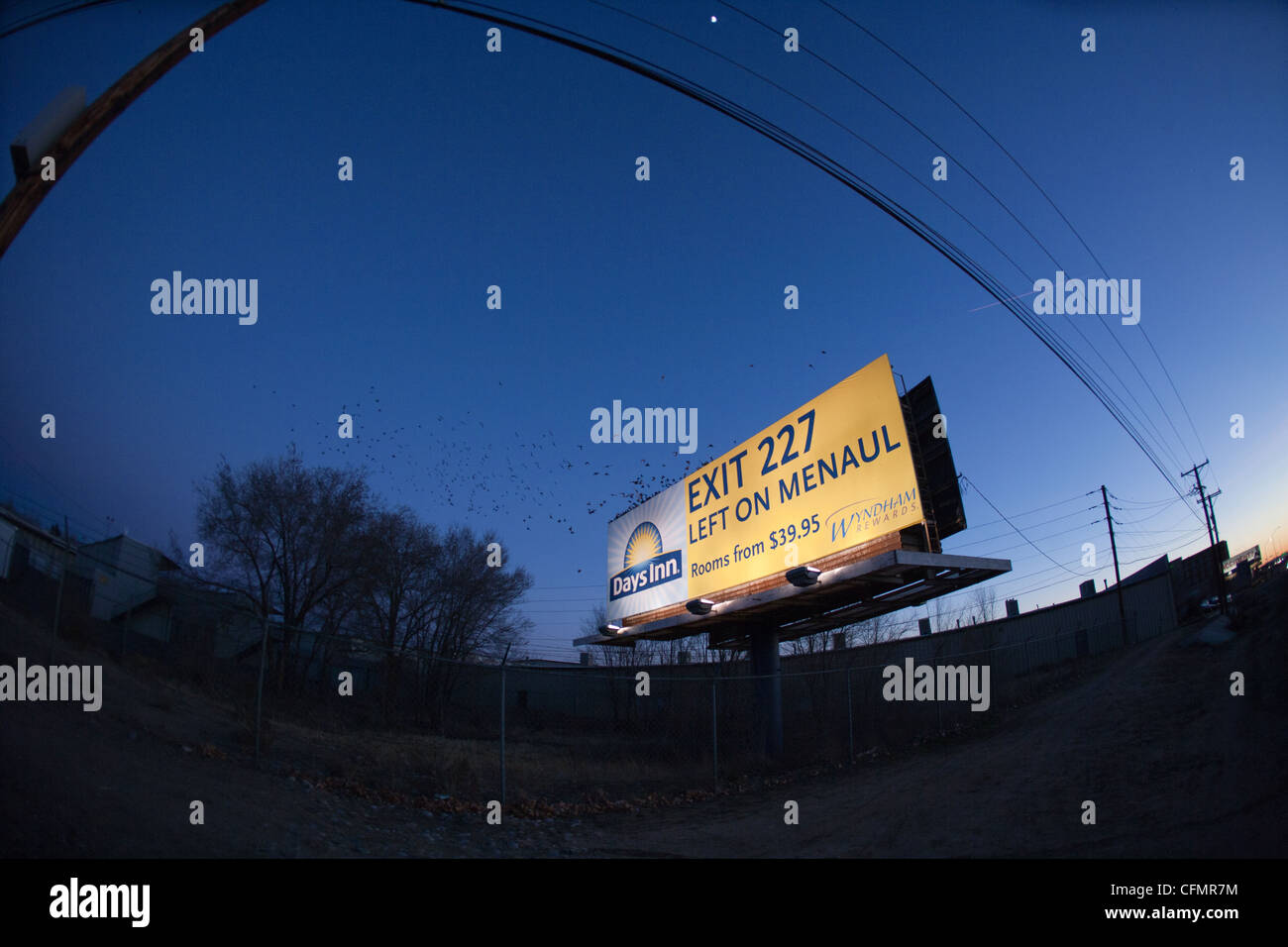 Starlings flying together at sundown, murmuration, landing in between two billboards to roost and sleep for the - Stock Image