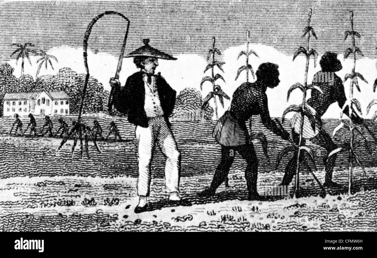 SLAVES ON SUGAR CANE PLANTATION in West Indies about 1810