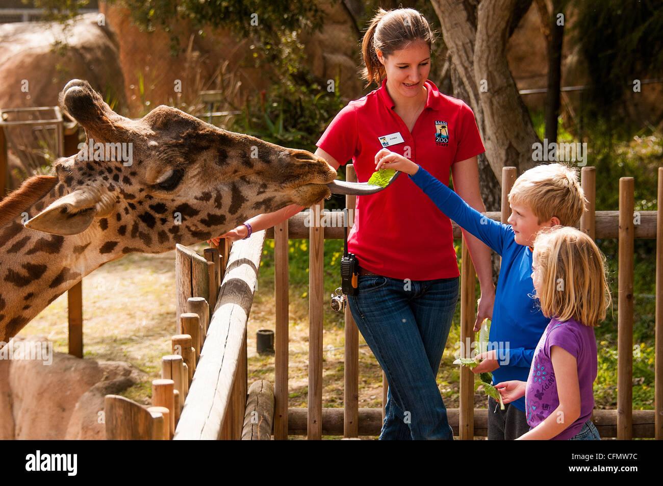 Children feed giraffe at Santa Barbara Zoo central California Coast USA - Stock Image
