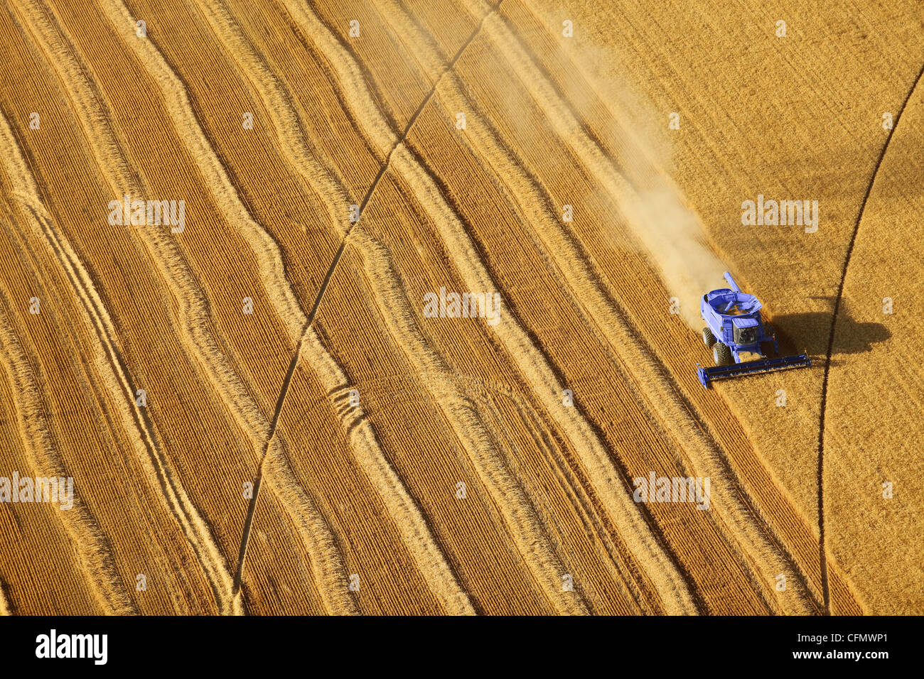 an aerial view of a wheat field being harvested - Stock Image