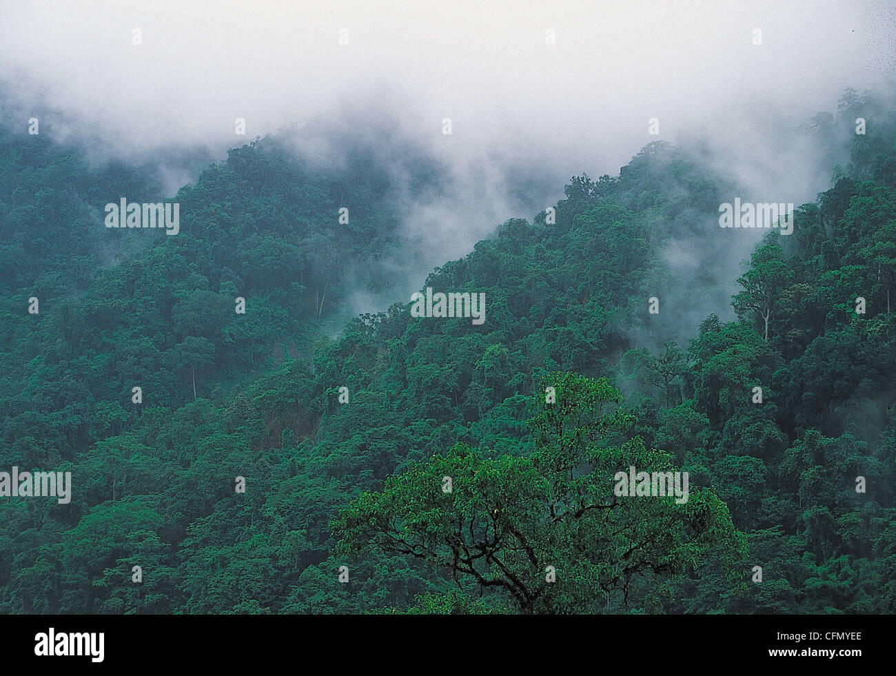 Mist over the rainforest Western Gats India - Stock Image