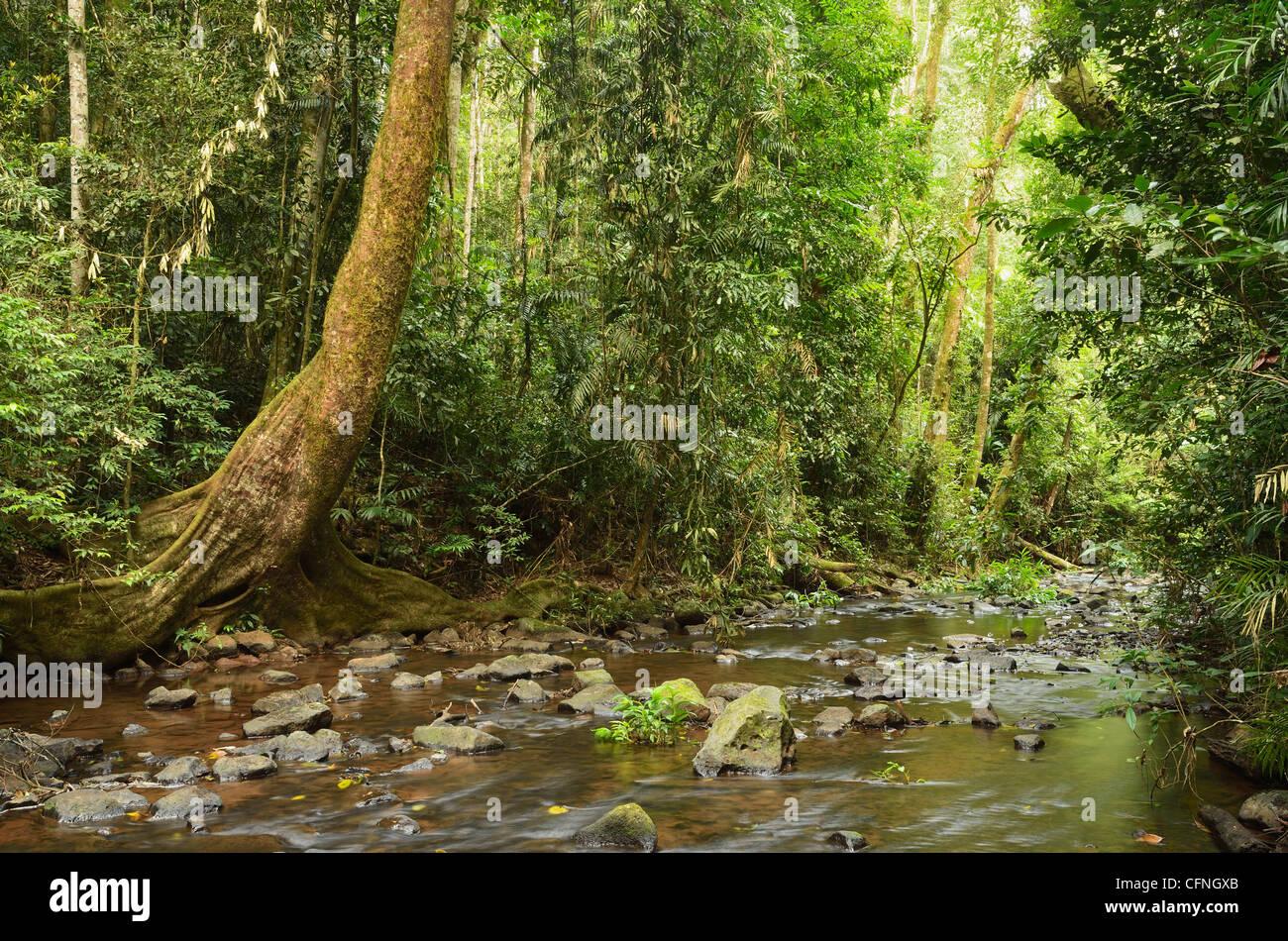 Millaa Millaa River, Atherton Tableland, Queensland, Australia, Pacific - Stock Image