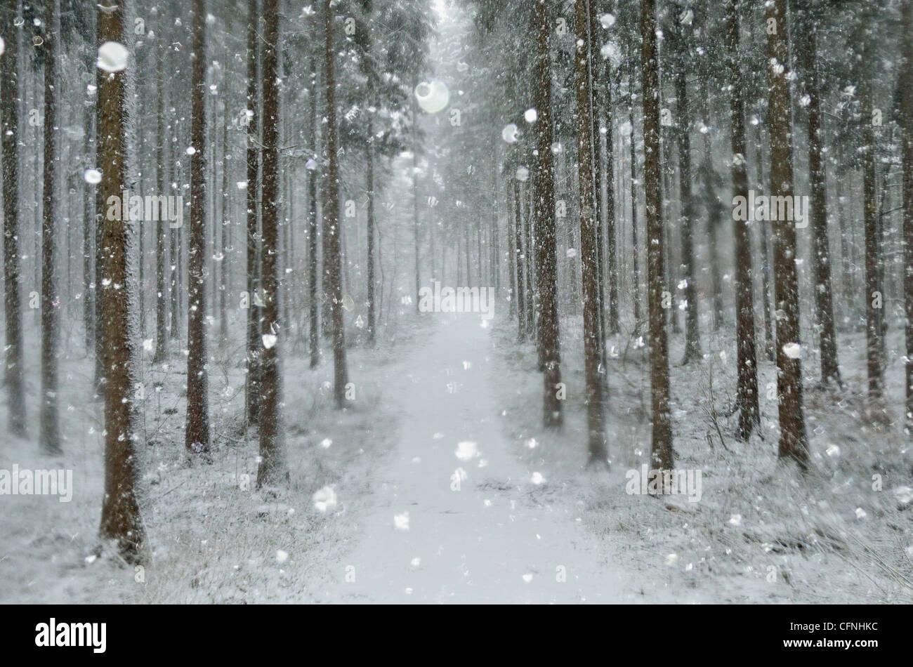 Winter landscape, near Villingen-Schwenningen, Black Forest, Baden-Wurttemberg, Germany, Europe - Stock Image