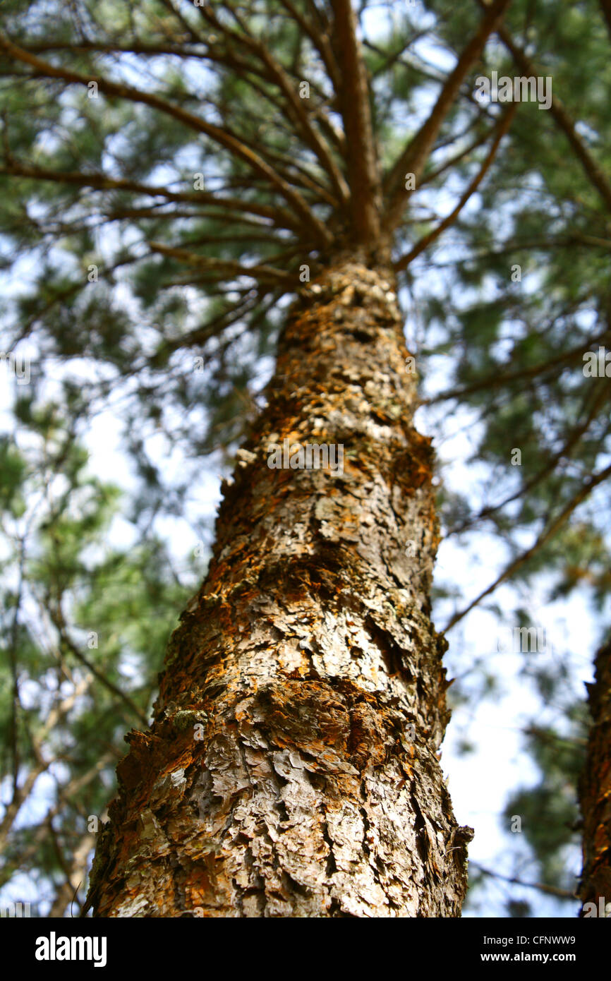 trees and forest - Stock Image