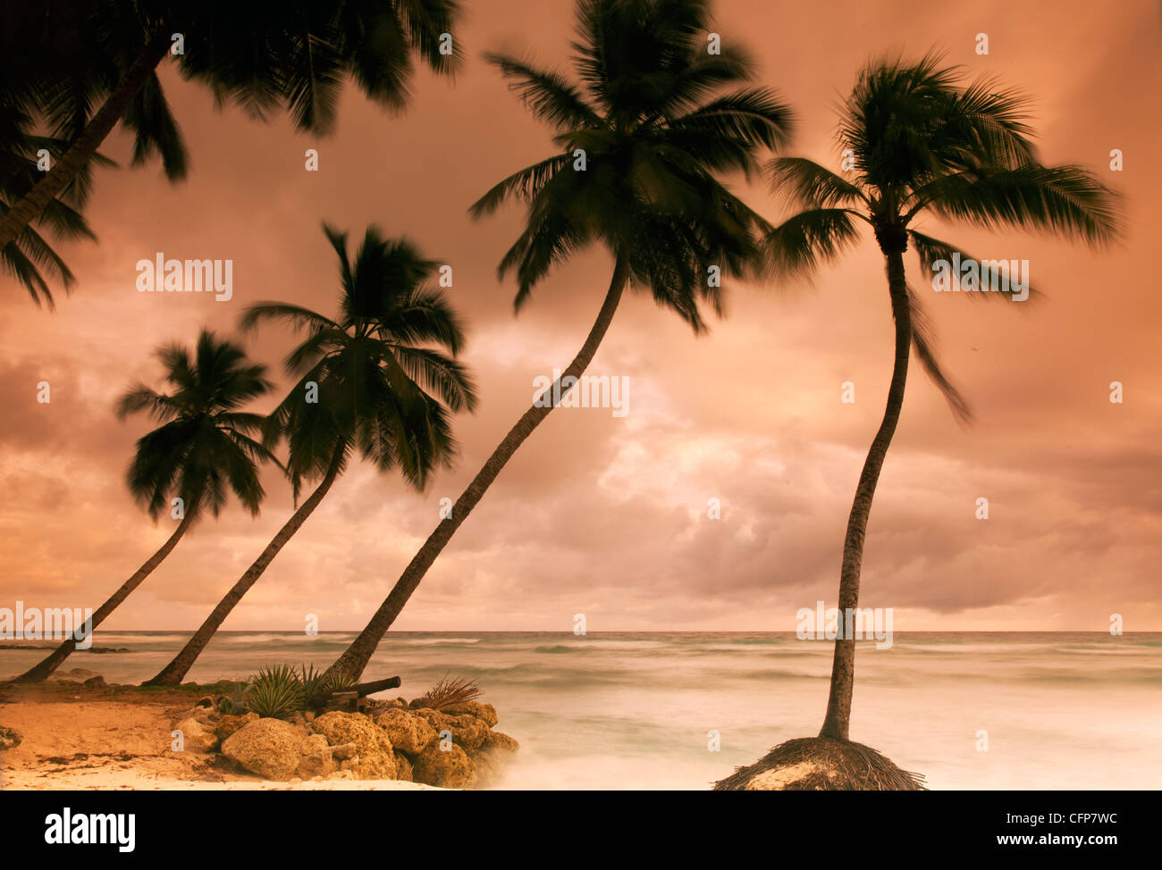 Tropical sunset, Bridgetown, Barbados, West Indies, Caribbean, Central America - Stock Image