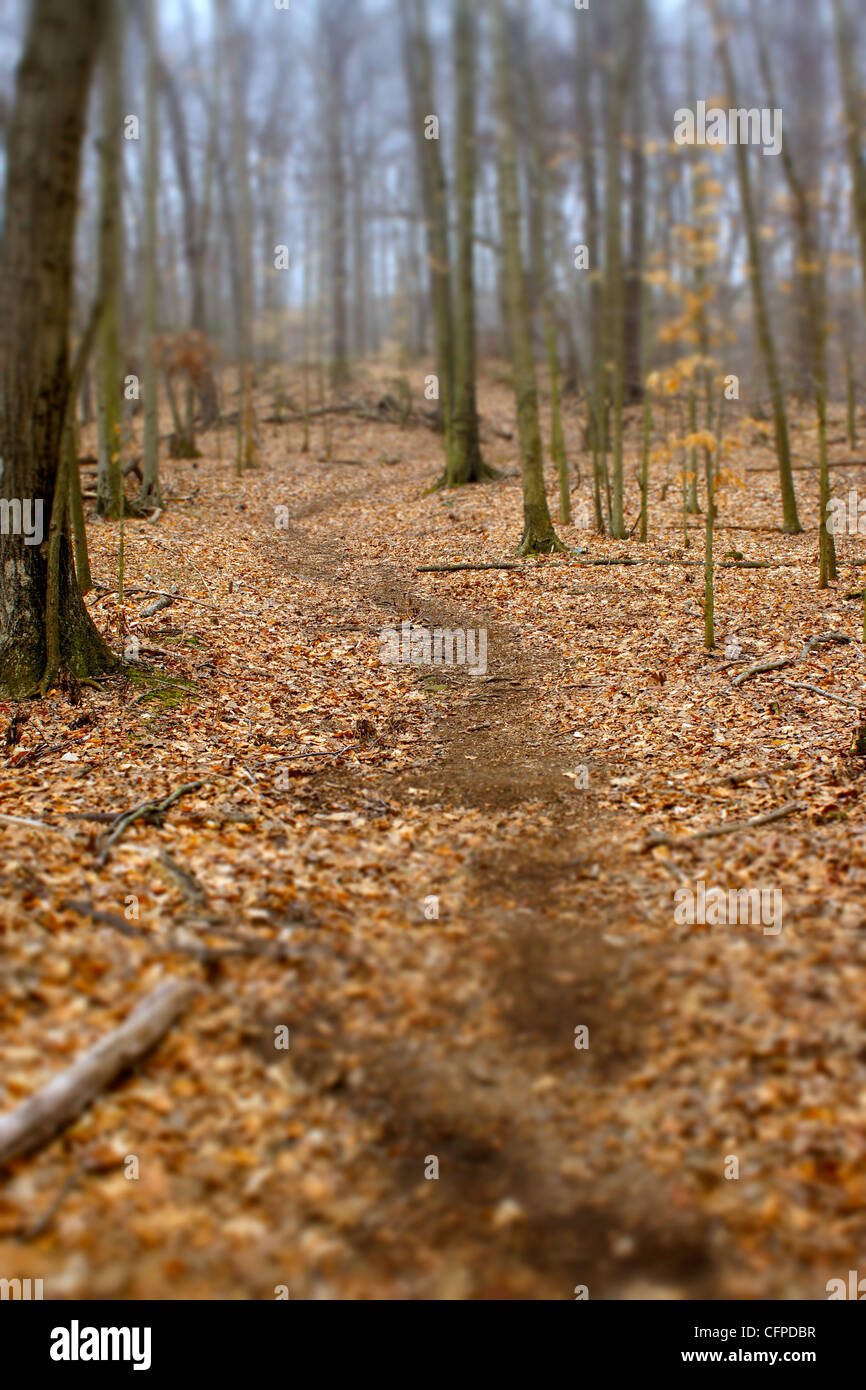 A trail through the trees in New Haven CT leading into distance, shot with a tilt view camera for selective focus - Stock Image