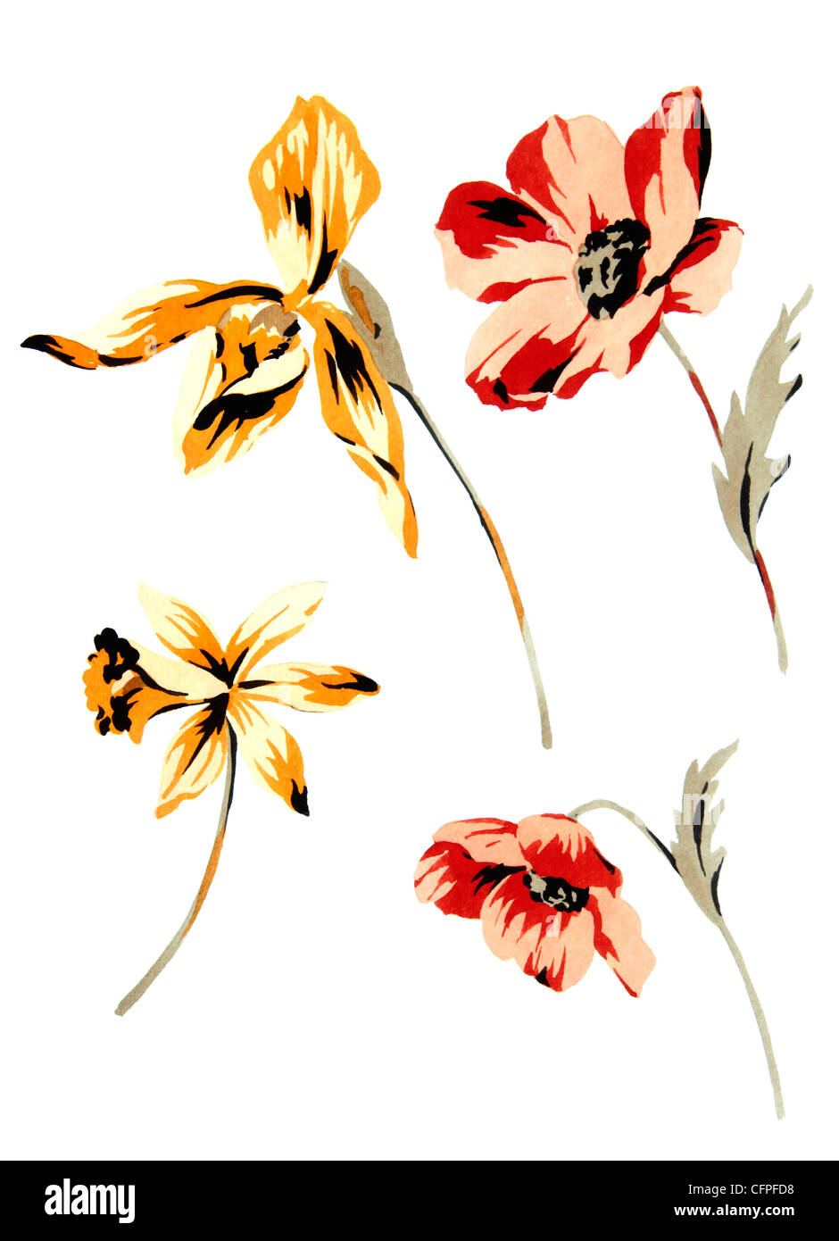 Color illustration of flowers in watercolor paintings - Stock Image