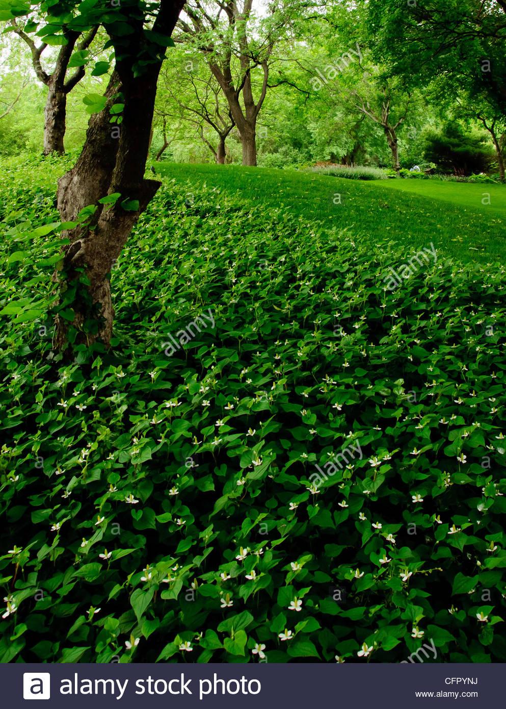 Bed of Green, Wichita Botanica Gardens, Wichita, KS, May 28, 2011 - Stock Image