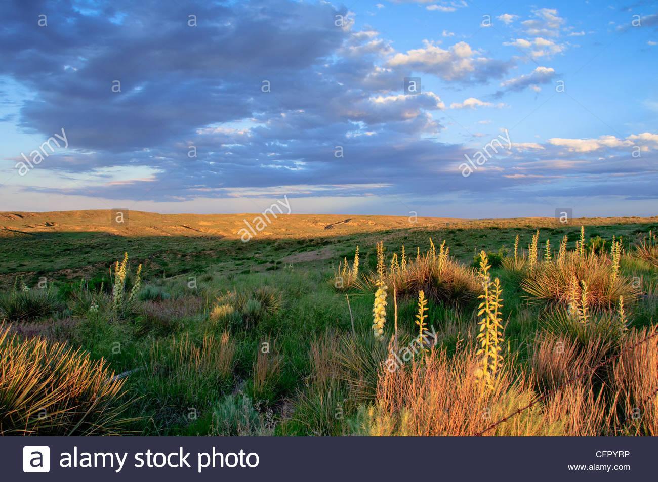 Arikaree Breaks - late evening, Cheyenne County, KS, June 5, 2010 - Stock Image
