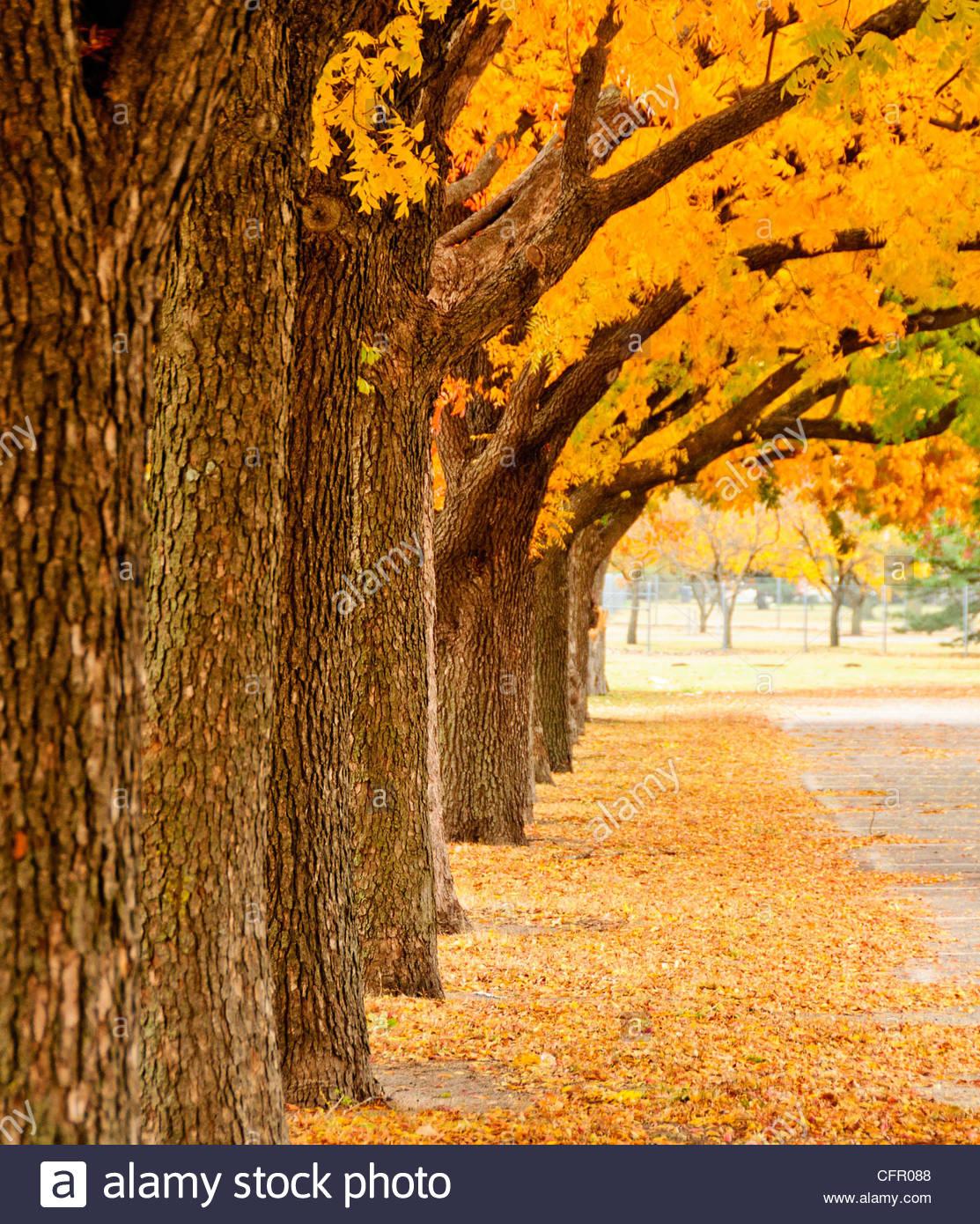 Autumn Colors at Watson Park, Wichita, KS, Nov 14, 2010 - Stock Image