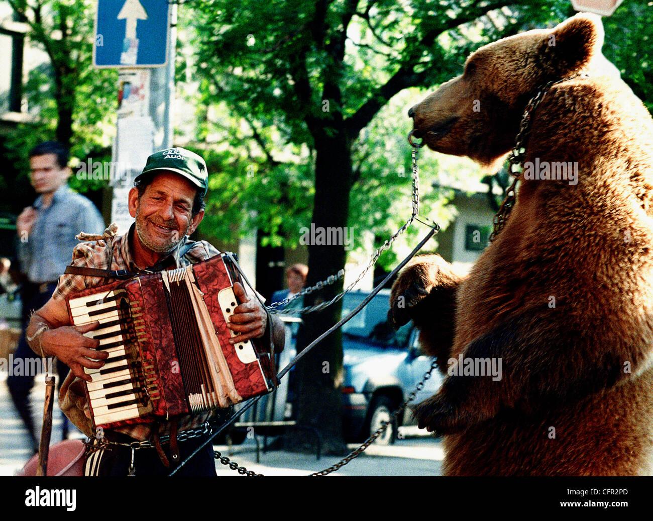 Oso. Bulgaria. Stock Photo