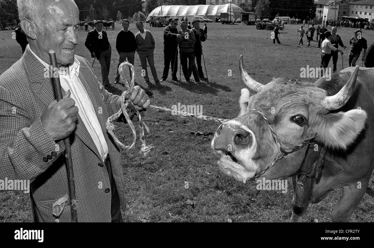 Feria de ganado en Caso. Asturias. - Stock Image