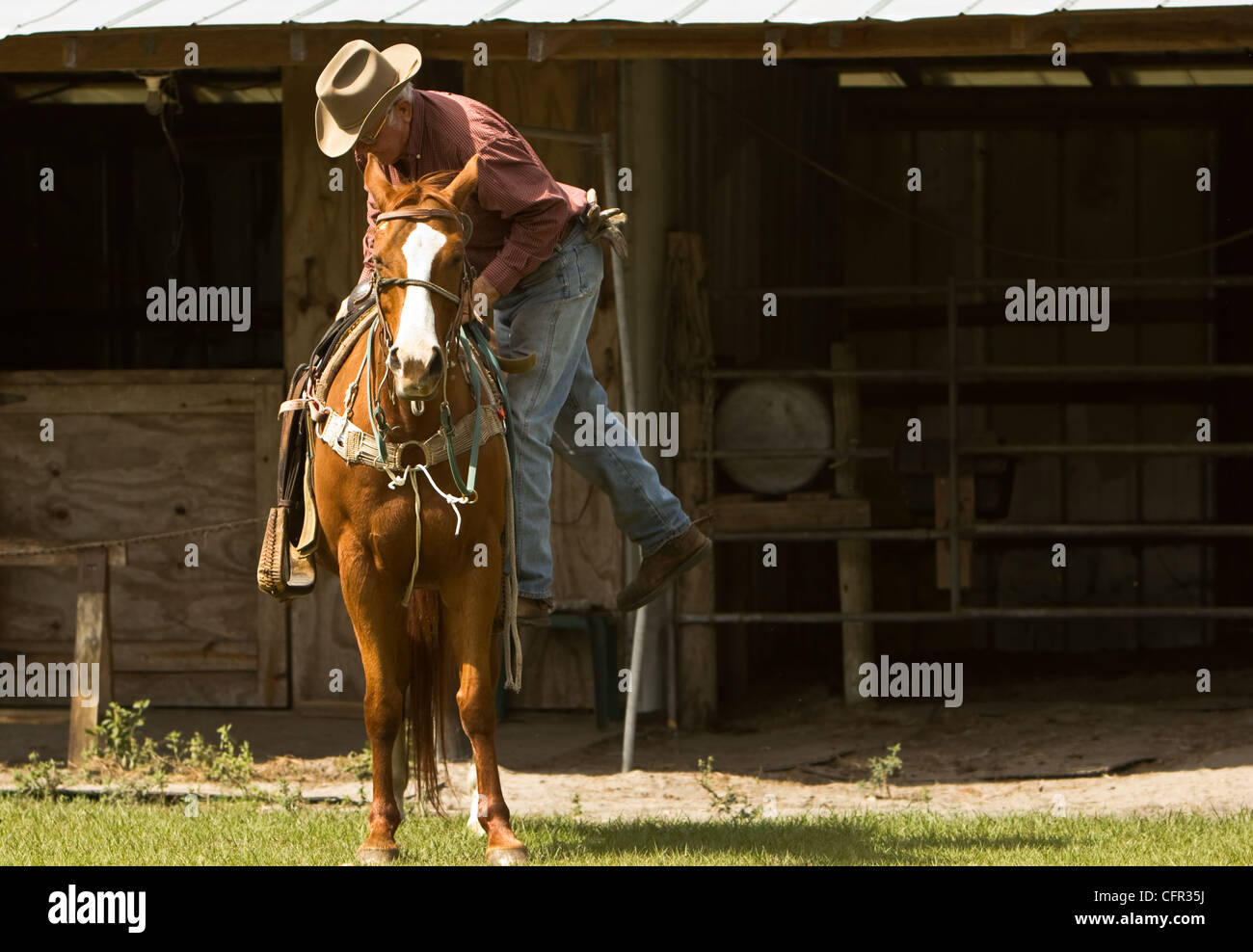 A cowboy is mounting his horse in front of his barn. Stock Photo