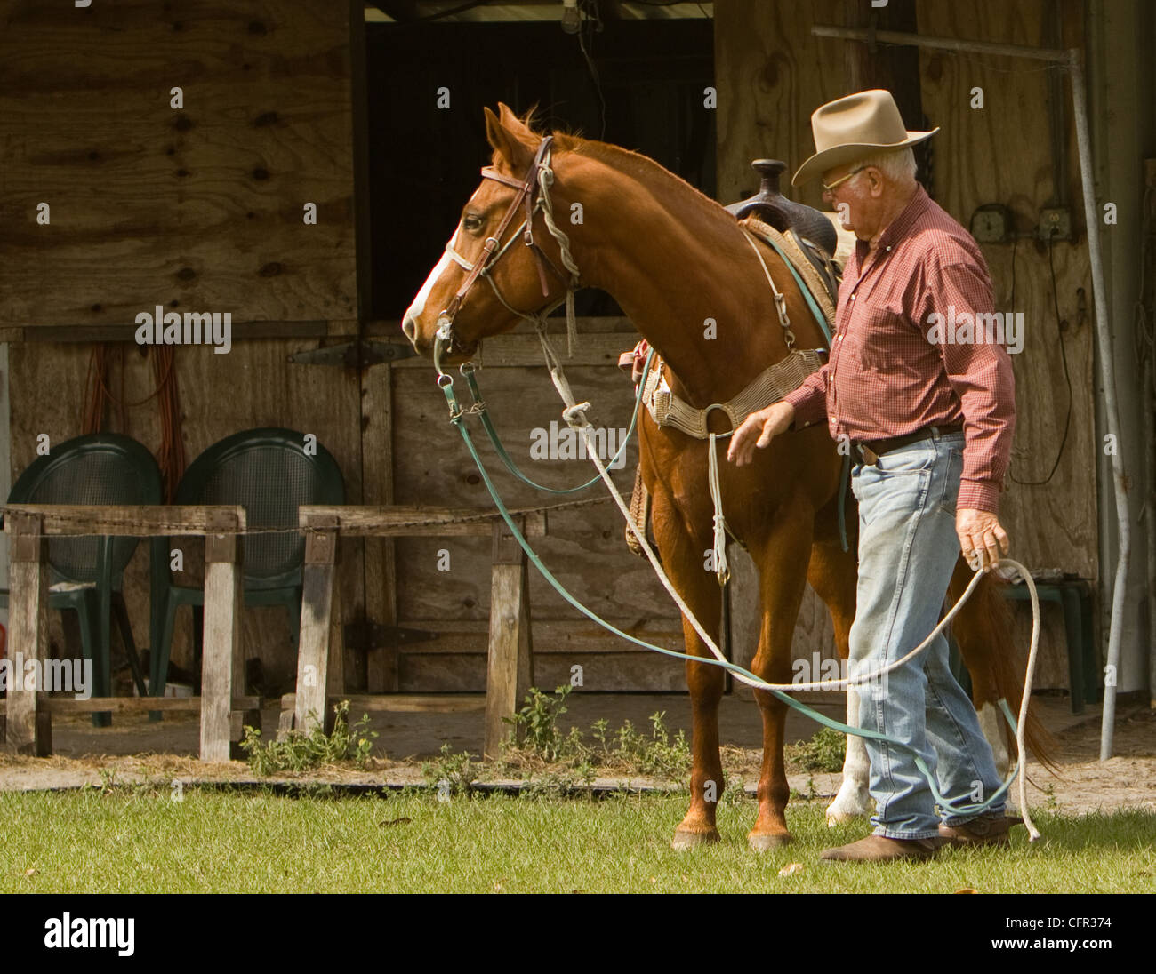 A cowboy preparing to mount his horse. - Stock Image