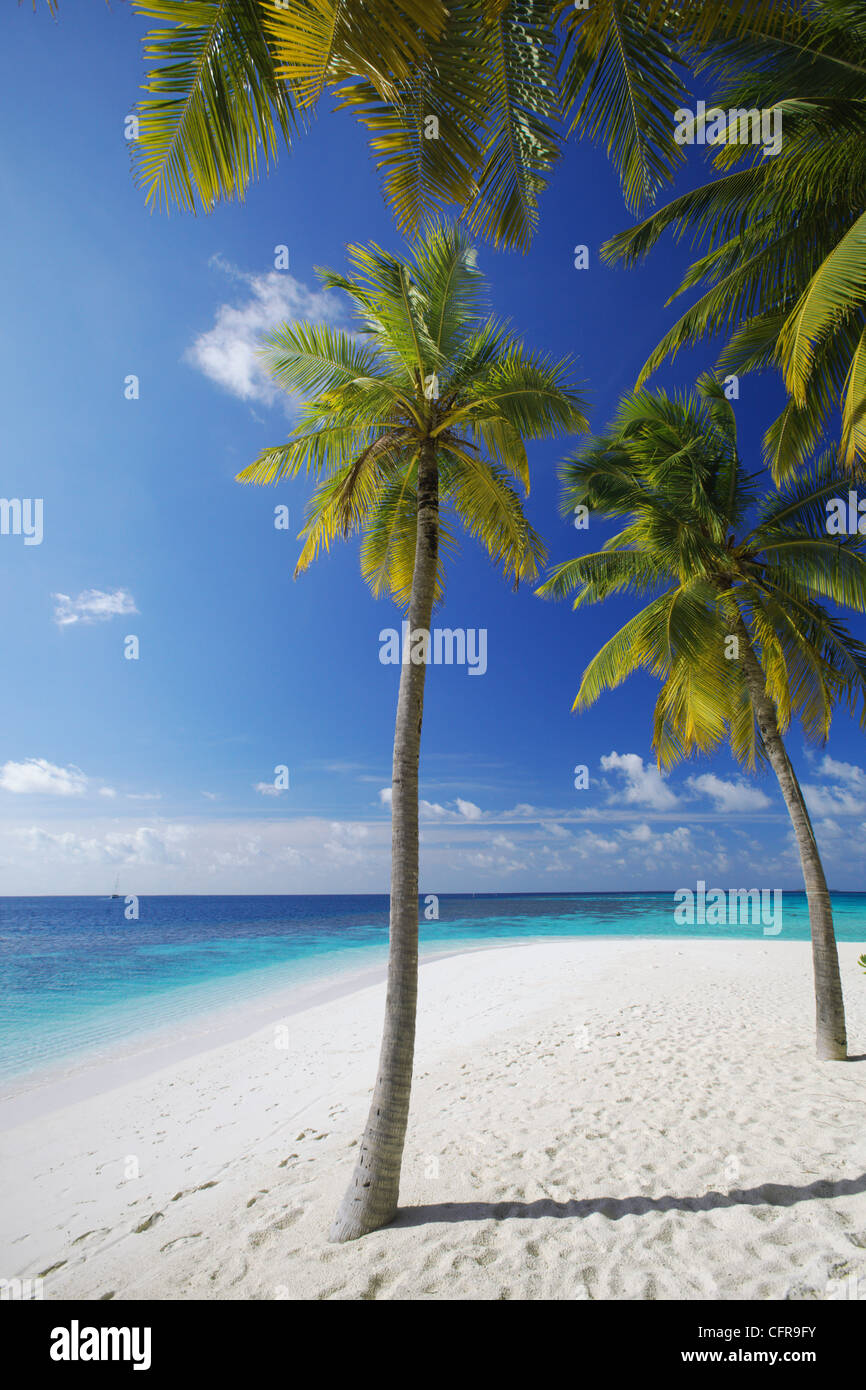 Palm trees on beach, Maldives, Indian Ocean, Asia - Stock Image