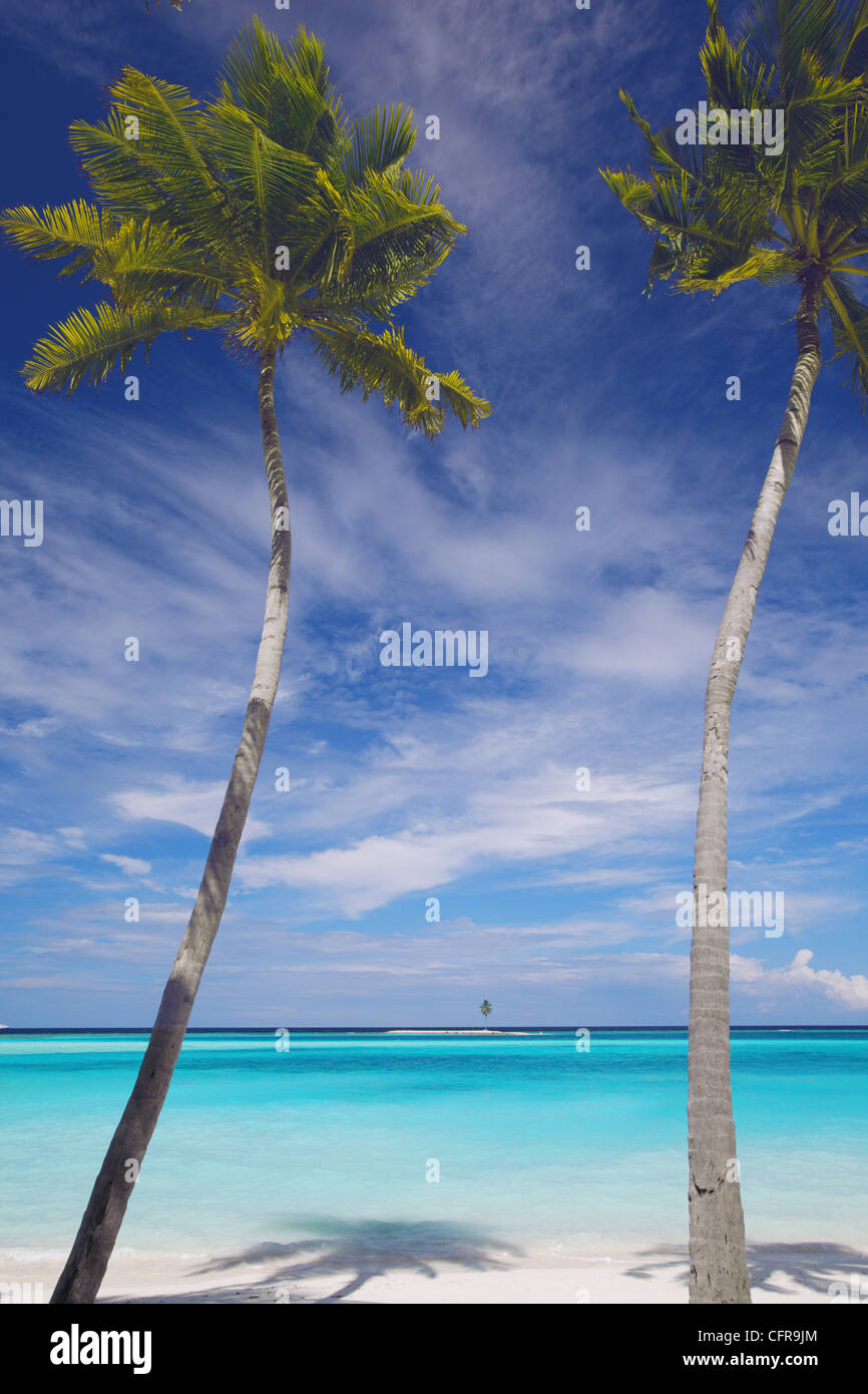 Palm trees on tropical beach, Maldives, Indian Ocean, Asia - Stock Image