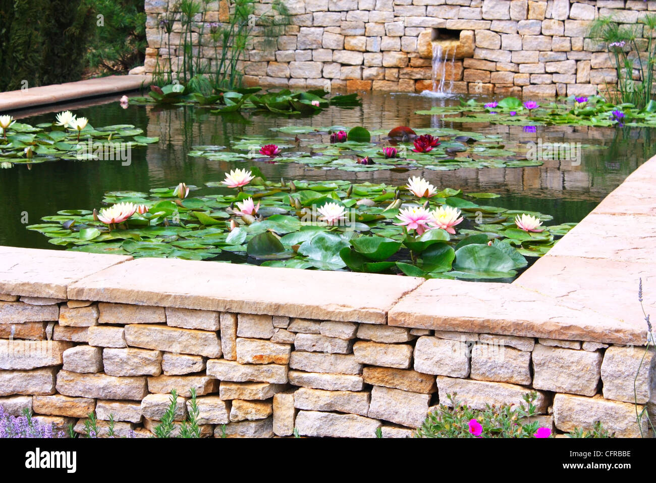 Lotus plants in water Stock Photo