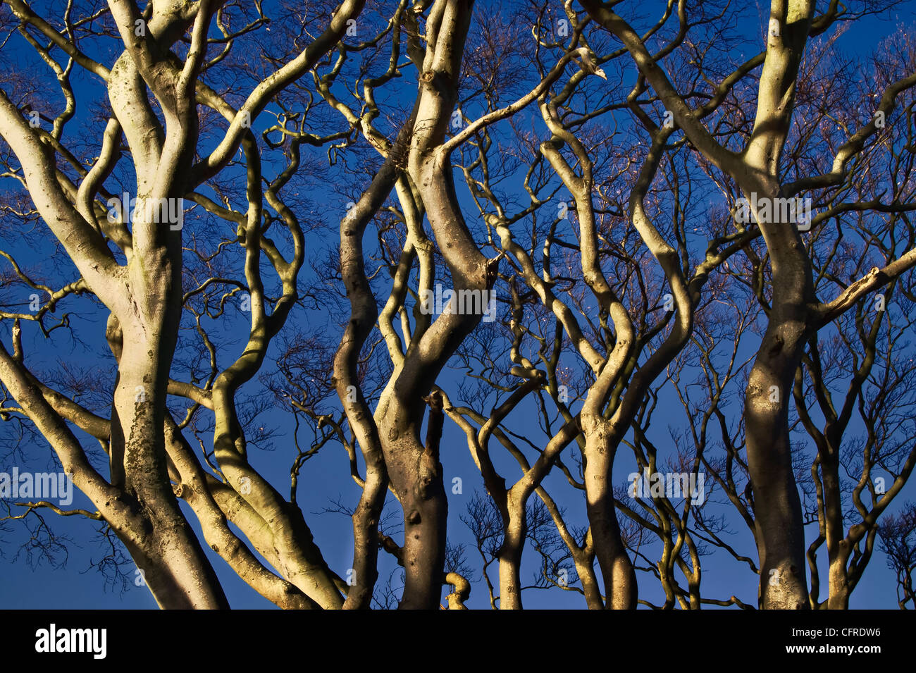 Bare tree branches in winter, with sunlight and shadow making patterns. - Stock Image