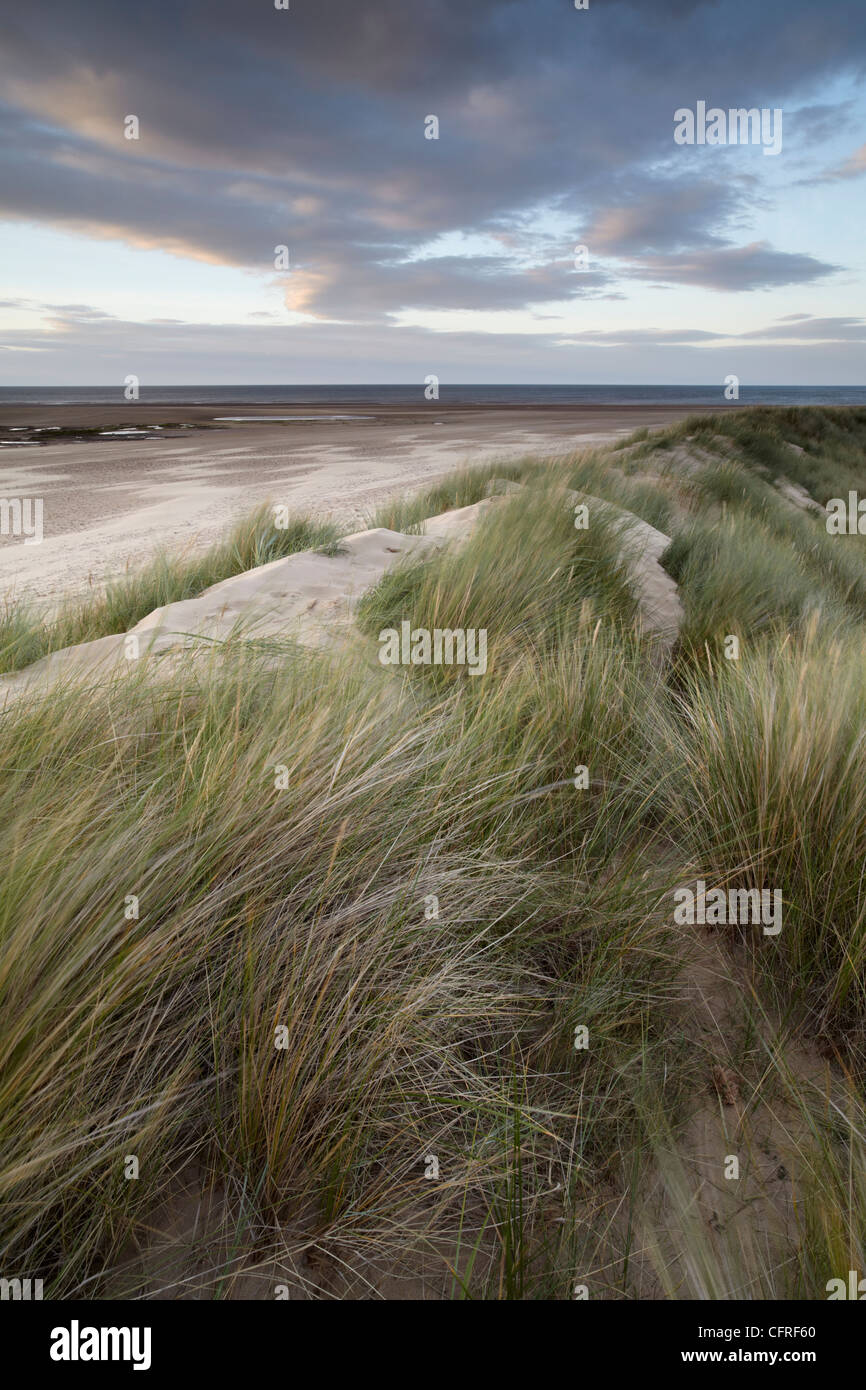 Low tide on a late summer evening at Brancaster, Norfolk, England, United Kingdom, Europe - Stock Image