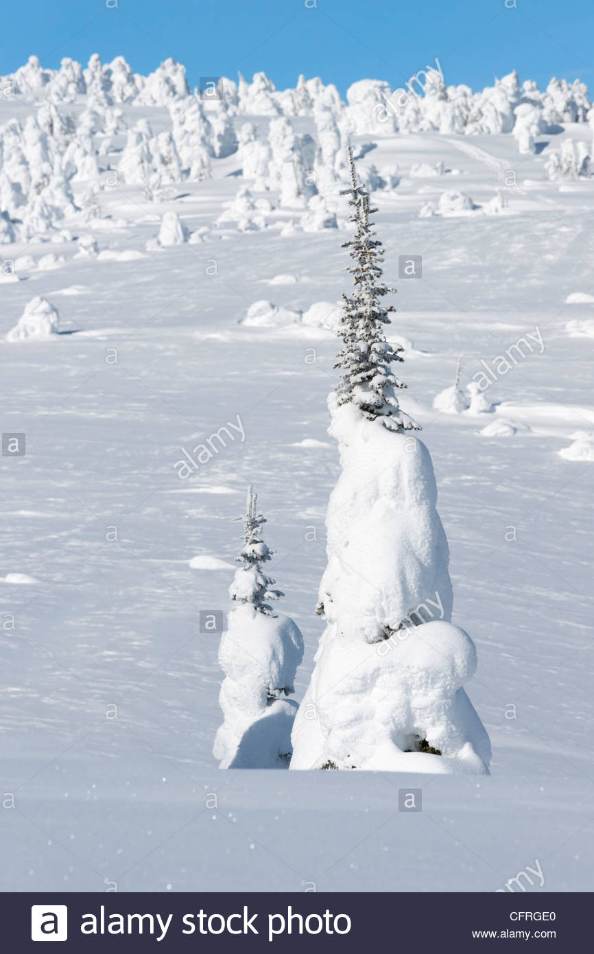 Hoar frost snow-covered trees on Two Top Mountain, West Yellowstone, Montana, United States of America, North America - Stock Image