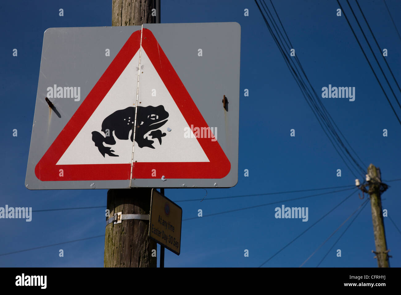 Red triangle warning road sign warning of toads or frogs crossing the road - Stock Image