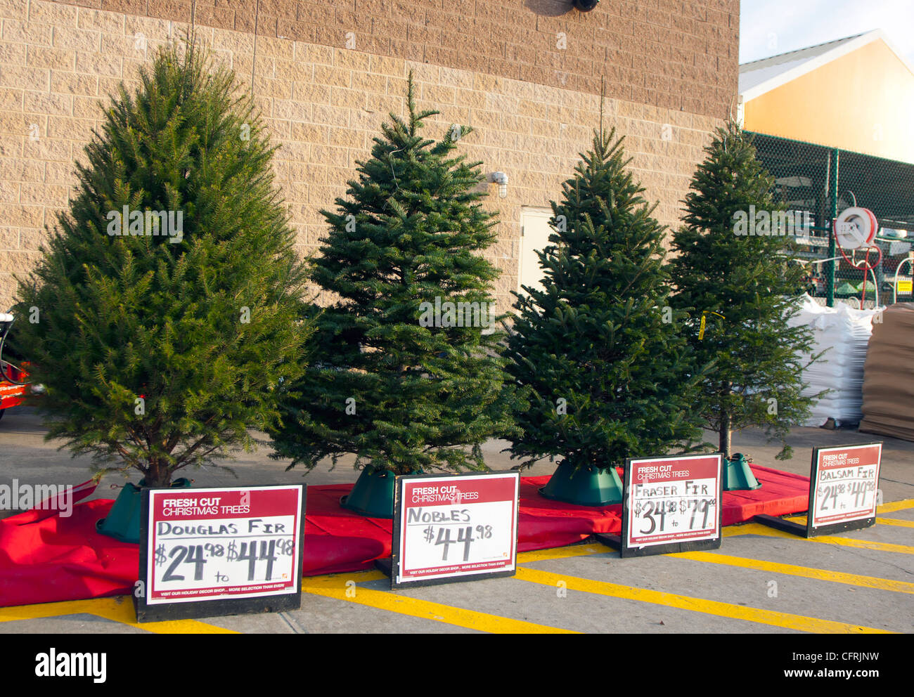 Type Of Christmas Trees.Different Types Of Christmas Trees For Sale Stock Photo