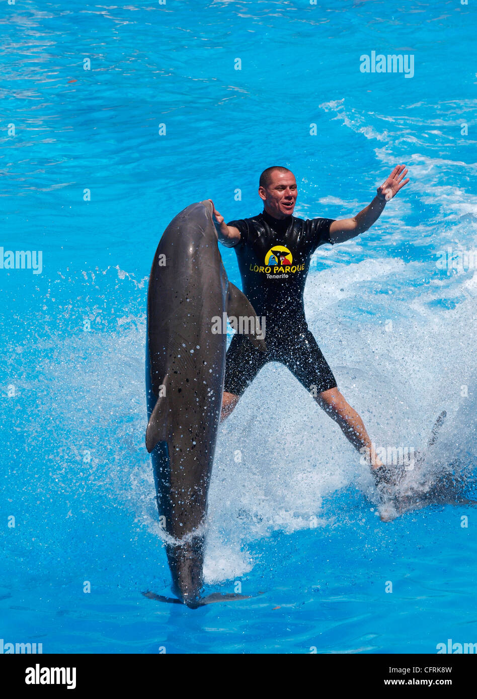 DOLPHIN SHOW AT LORO PARQUE TENERIFE Stock Photo