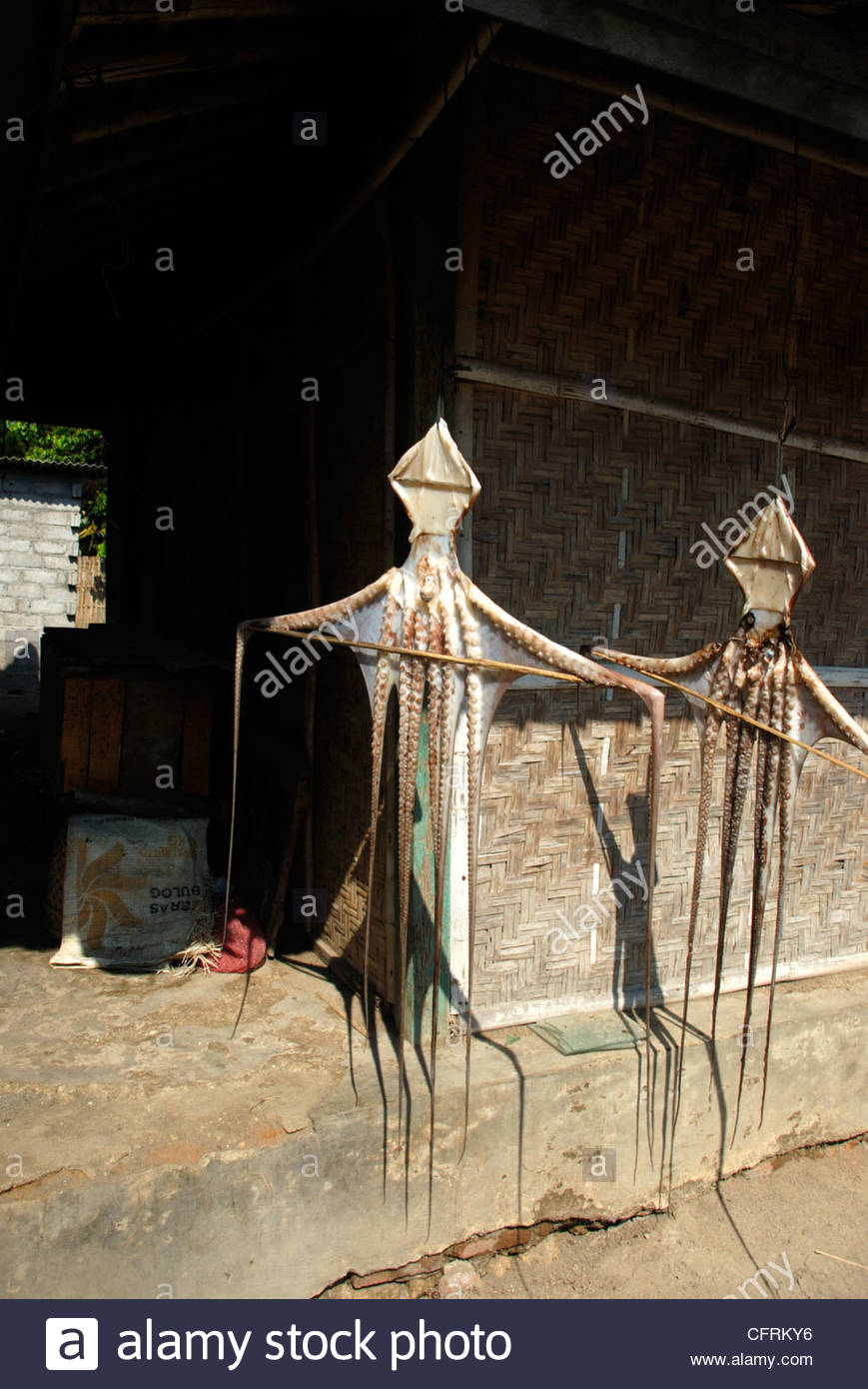Two octopi hanging up to dry in the sun in front of a woven bamboo house wall Ekas Lombok Timor NTB Indonesia - Stock Image