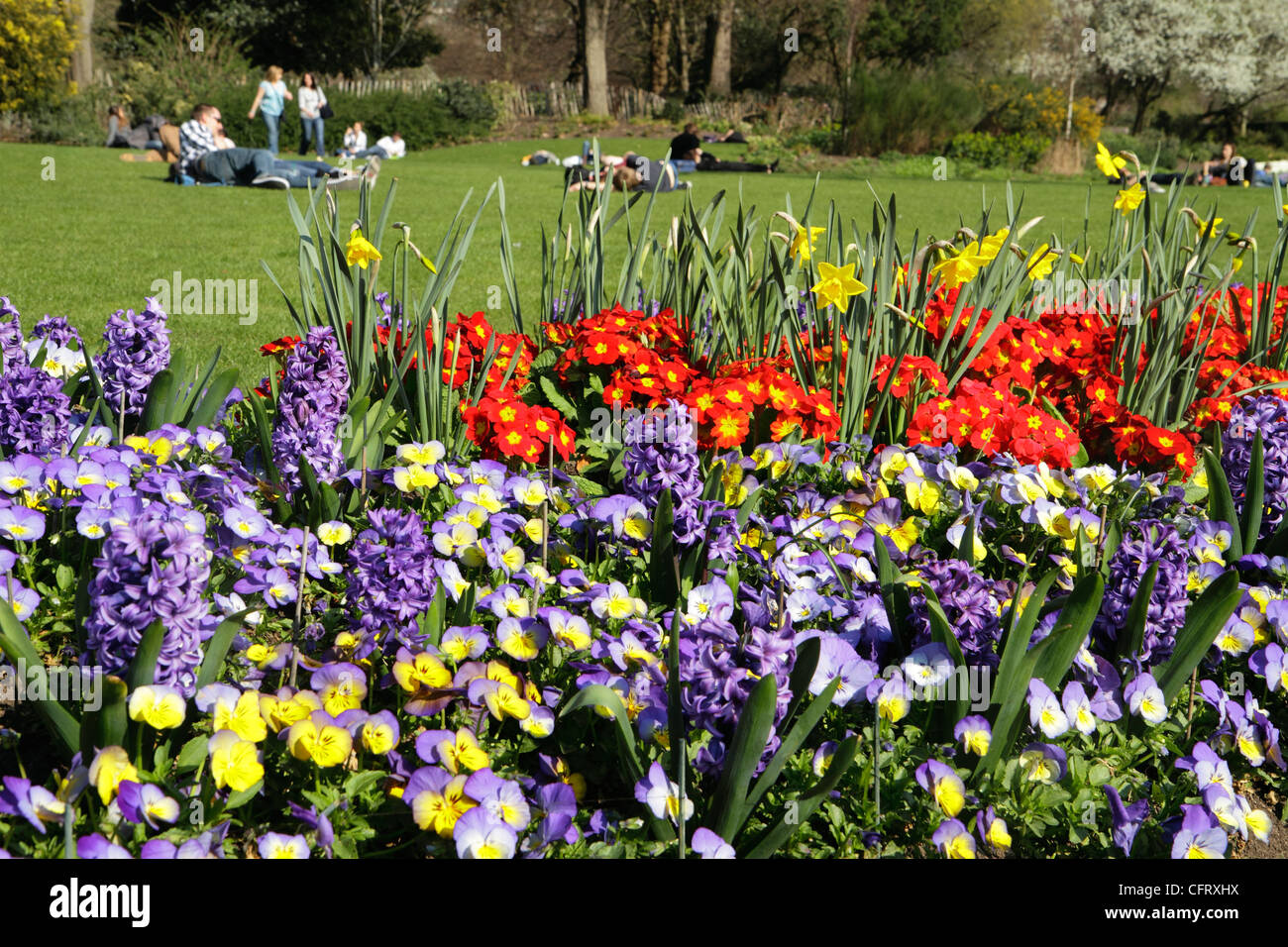 Spring flowers hyde park london uk stock photo 44166358 alamy spring flowers hyde park london uk mightylinksfo