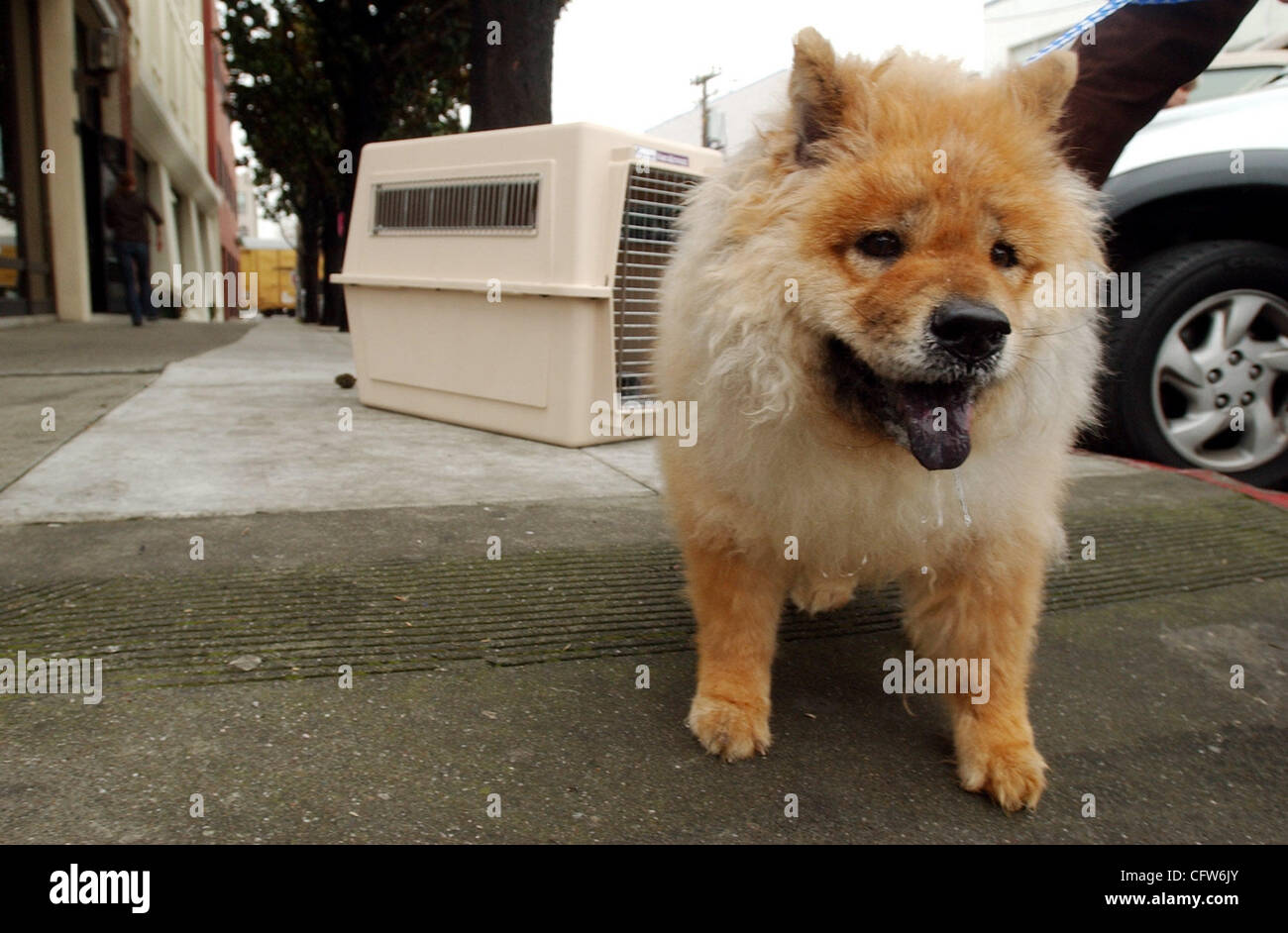 Queenie, a 9-year-old chow chow, prepares for her flight