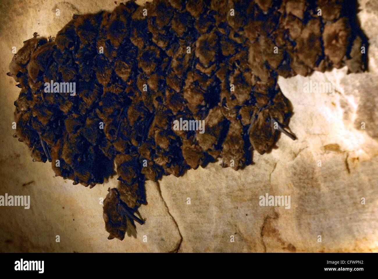 A network of tunnels in the oldest part of the mining complex provides deluxe accomodations for hibernating bats. - Stock Image