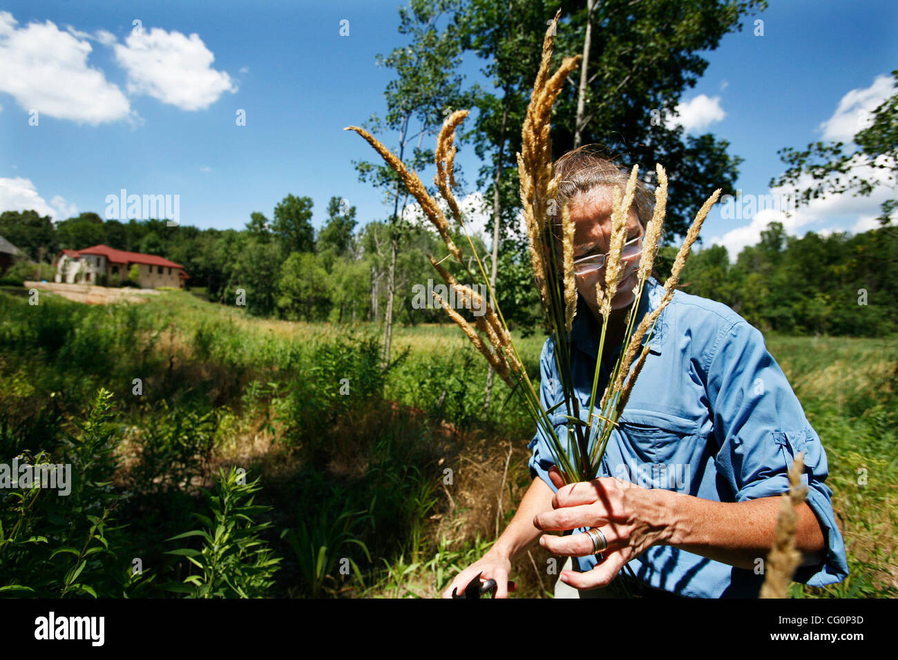 Minnetonka, MN;7/5/07;left to right: Ecologist Lee Marlowe removes a bundle of Reed canary grass. The nonnative - Stock Image