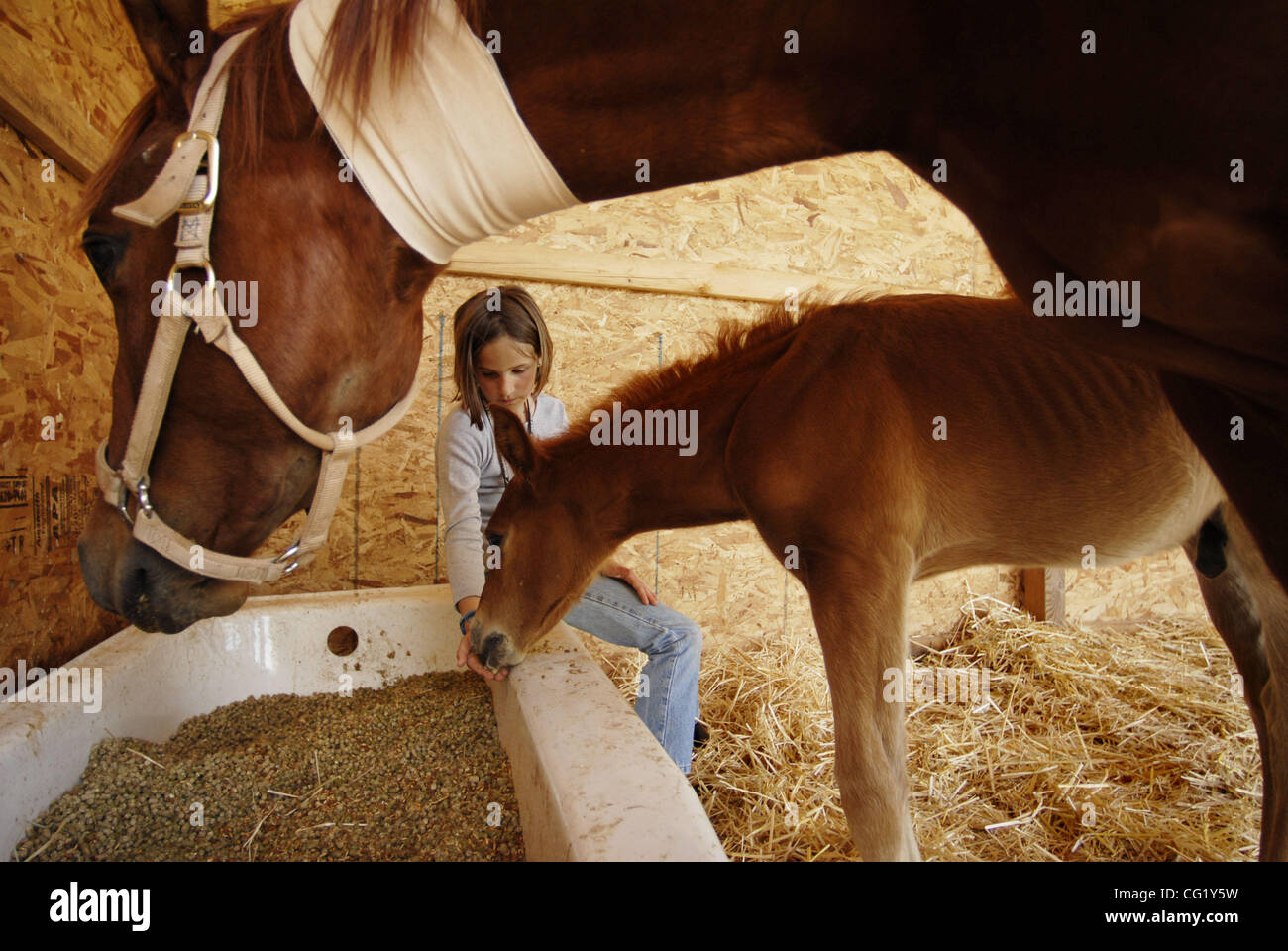 LEDE - Nine-year-old Stephanie Resha of Folsom, feeds three-week-old foal, Duke, at the Grace Foundation of Northern Stock Photo