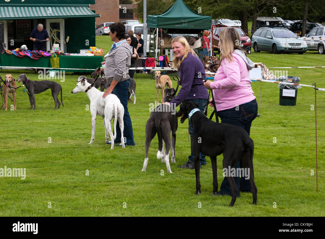 2nd September 2012. Northants Greyhound Rescue Gala Day. At the Holiday Inn. Crick.  Northamptonshire UK. NGR is - Stock Image
