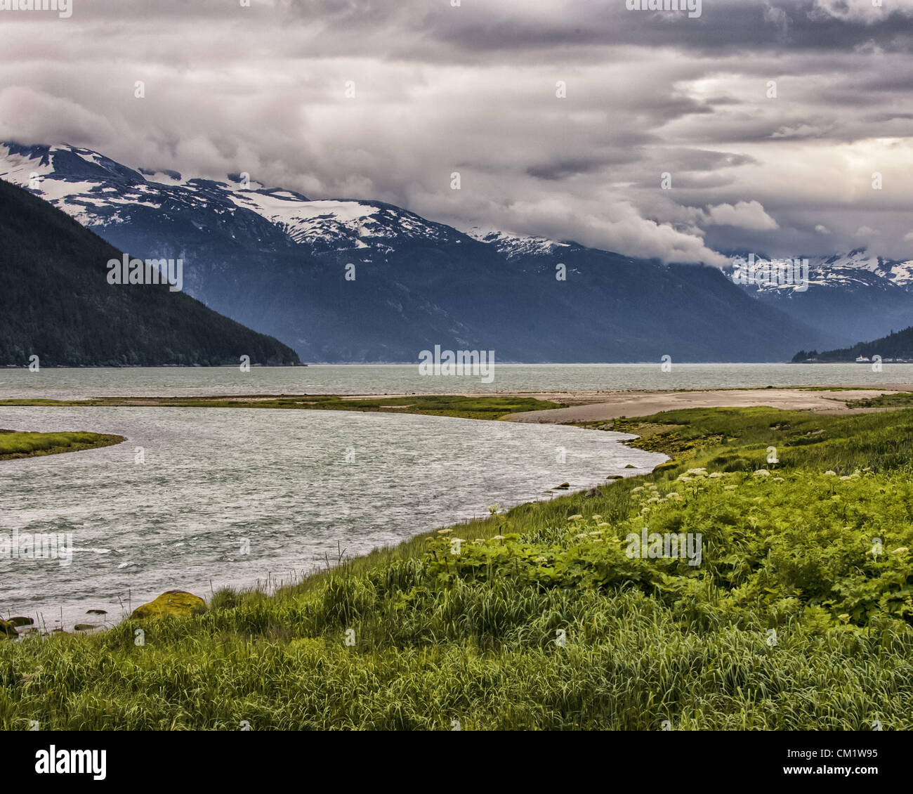 July 4, 2012 - Haines, Alaska, US - Wildflowers grow along the banks of the mouth of the Chilkoot River, looking - Stock Image